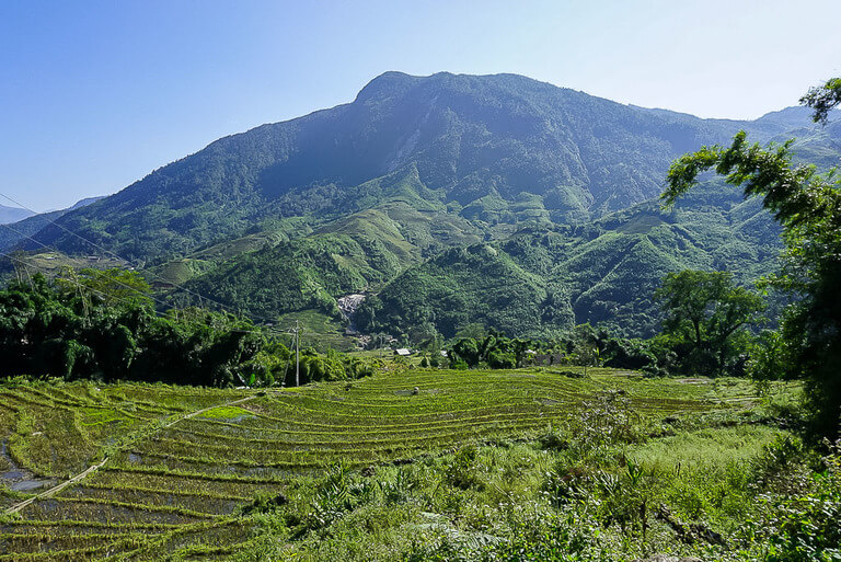 green rice fields and hills with clear sky in sapa vietnam