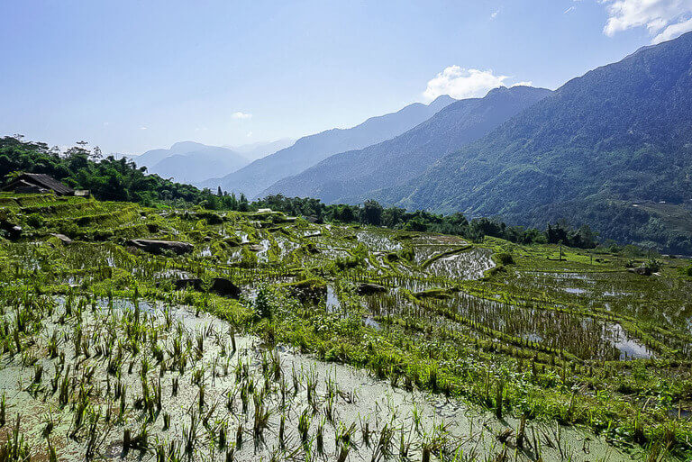 rice terraces filled with water after downpour sapa vietnam
