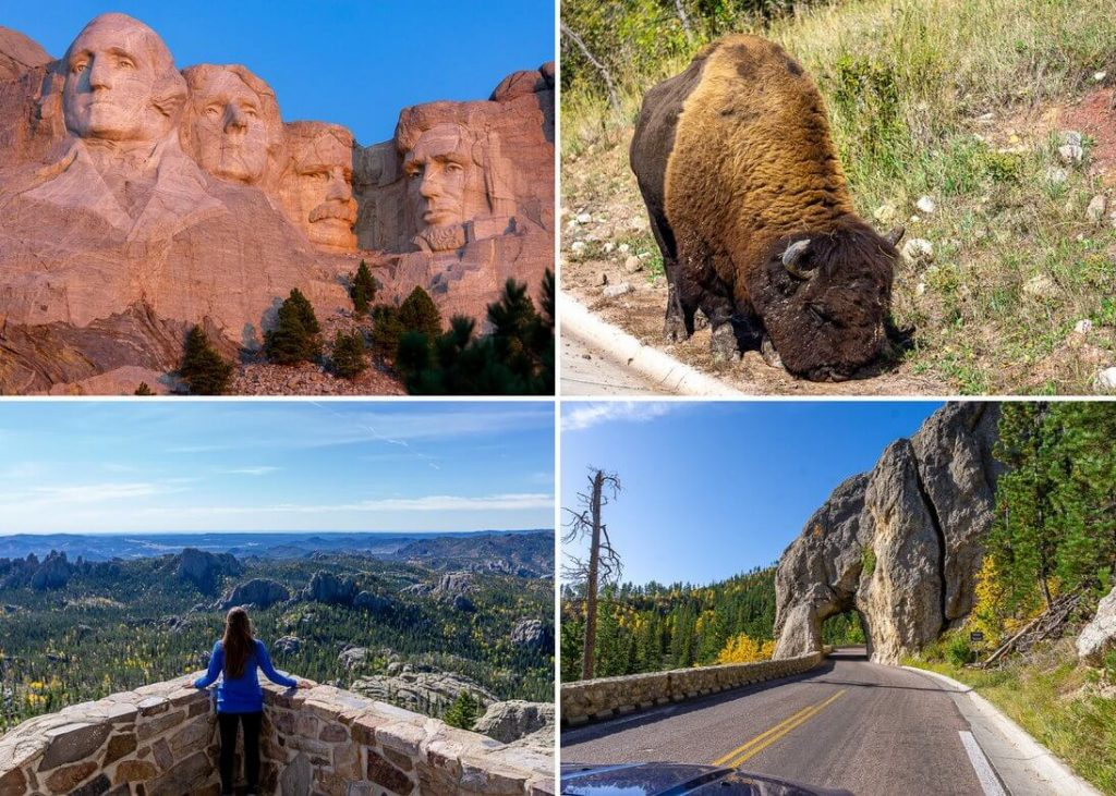 Where to go from Badlands South Dakota? Mt Rushmore, Custer state park, black elk peak, Custer scenic drive
