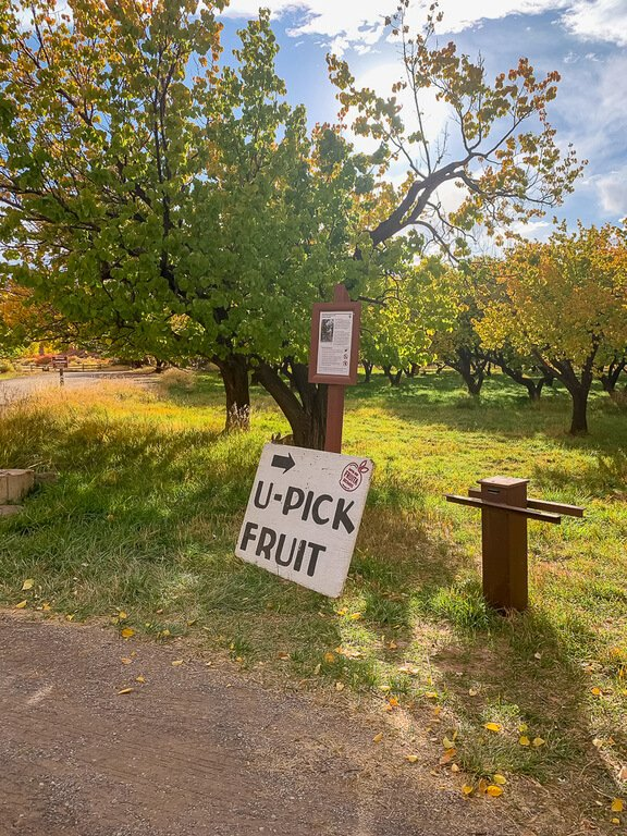 U Pick Fruit sign at an orchard in Capitol Reef