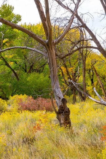 Bare tree surrounded by gorgeous colorful vegetation Utah