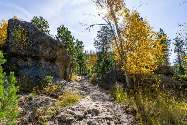 Beautiful hiking trail Black Elk Peak Custer State Park South Dakota Black Hills golden yellow leaves
