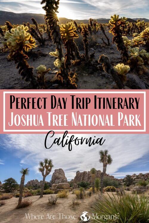 Perfect Day Trip Itinerary Joshua Tree National Park California