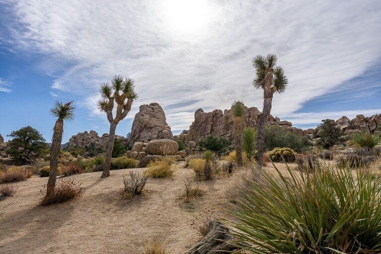 Joshua Tree easy hiking trail suitable for families called hidden valley lovely view with wispy clouds