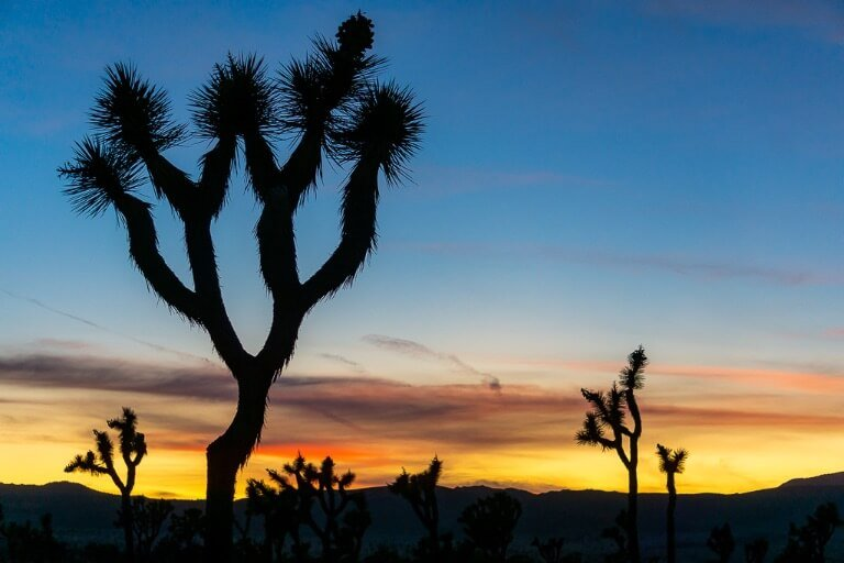 Gorgeous sunset colors and silhouetted Joshua Trees day trip