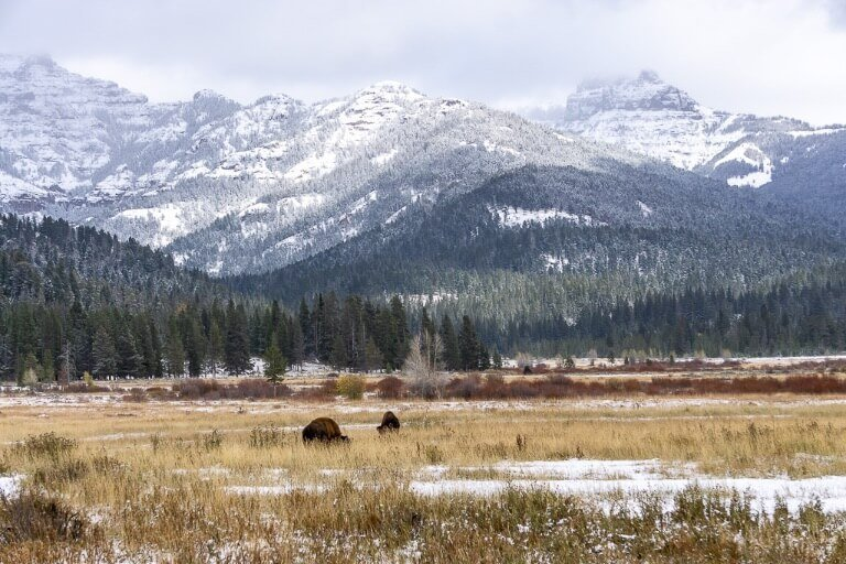 Lamar Valley Tower-Roosevelt Yellowstone bison mountains
