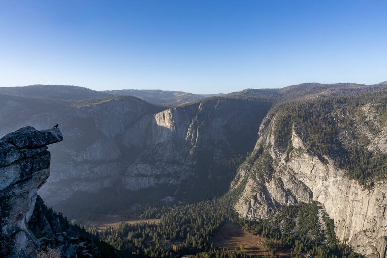 Brid perched on edge of a rock overlooking Yosemite Valley