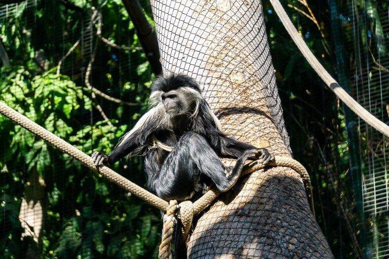 Monkey at San Diego Zoo in Balboa park