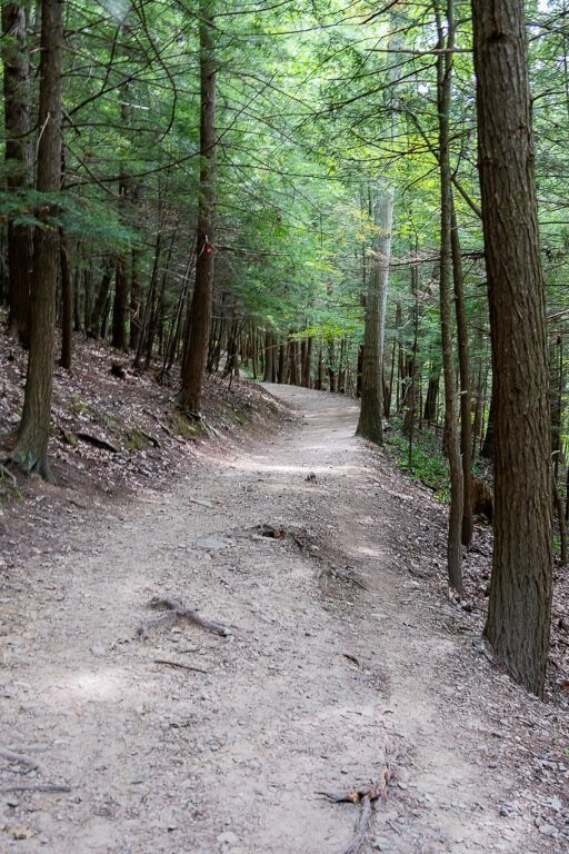 Rim trail climbing quite steeply and through lovely forested land