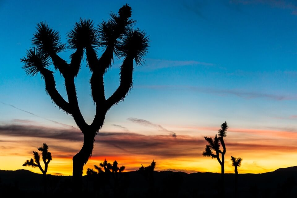 Joshua Tree photography stunning silhouetted joshua trees against a beautifully colorful sunset with blues oranges yellows and reds in the sky pictures of america