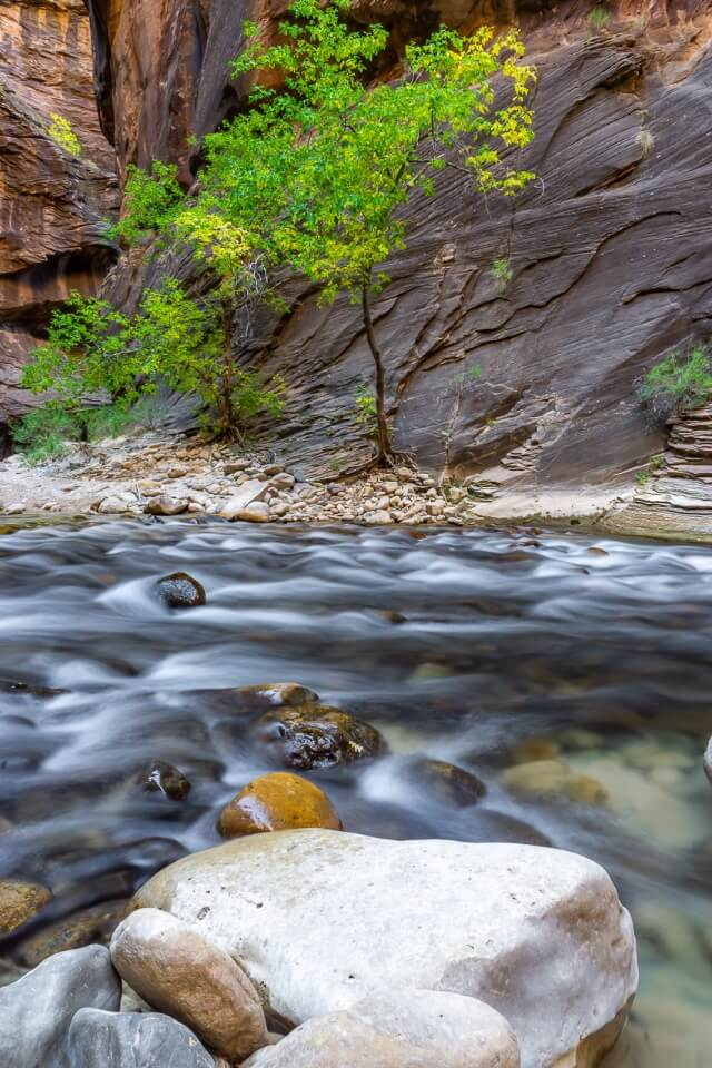 Tree and river inside canyon the narrows hiking trail zion national park utah