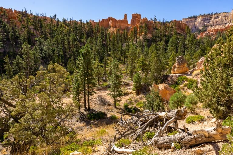 Green trees forest surrounded by orange sandstone rocks in utah