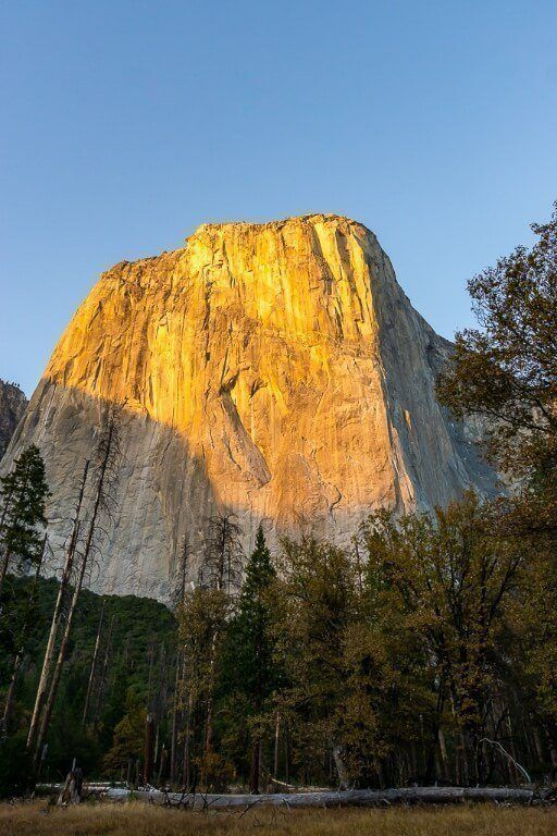 Dawn Wall El Capitan glowing yellow at sunrise in yosemite valley with trees and log on its side foreground in shadow