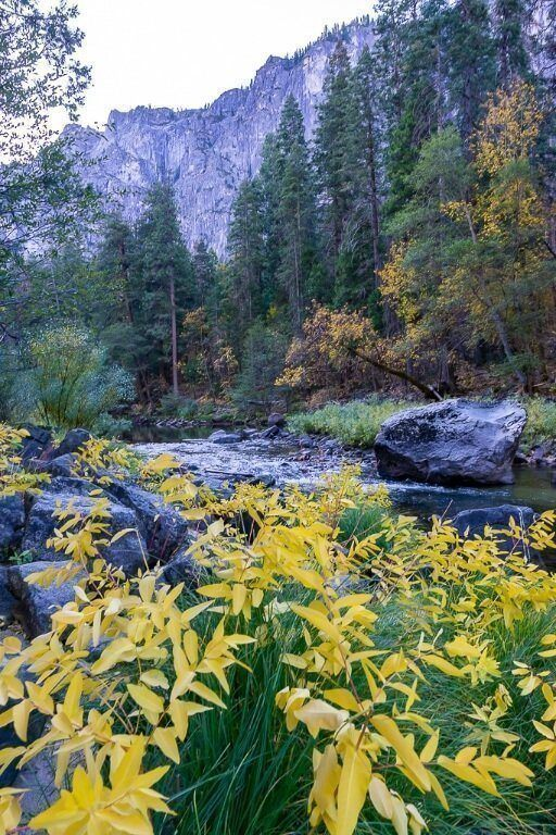 Yellow flowers in front of a river and granite dome before sunrise in california