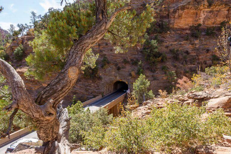 Mount Carmel tunnel entrance behind a tree in Utah