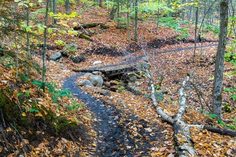 Muddy trail colorful leaves through forest in mount marcy hike adirondacks