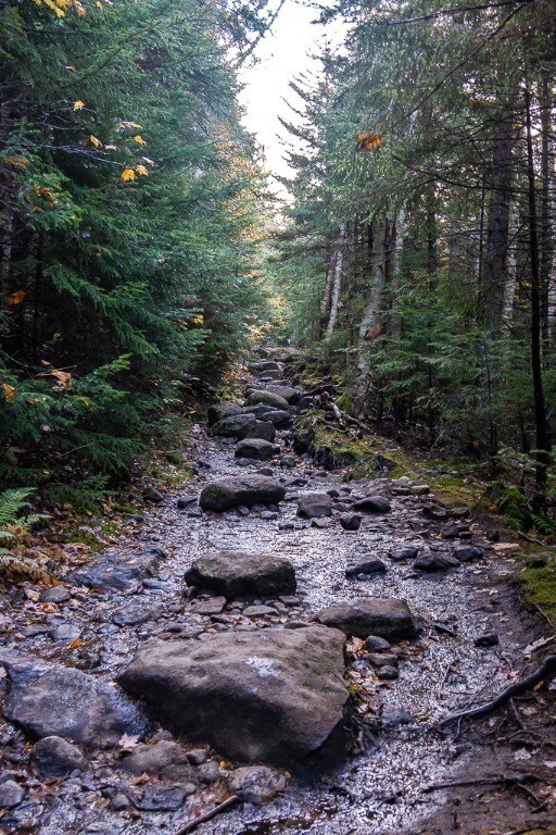 Long slow gradual climb on narrow rocky hiking trail through forest to mount marcy summit the tallest peak in new york adirondack mountains