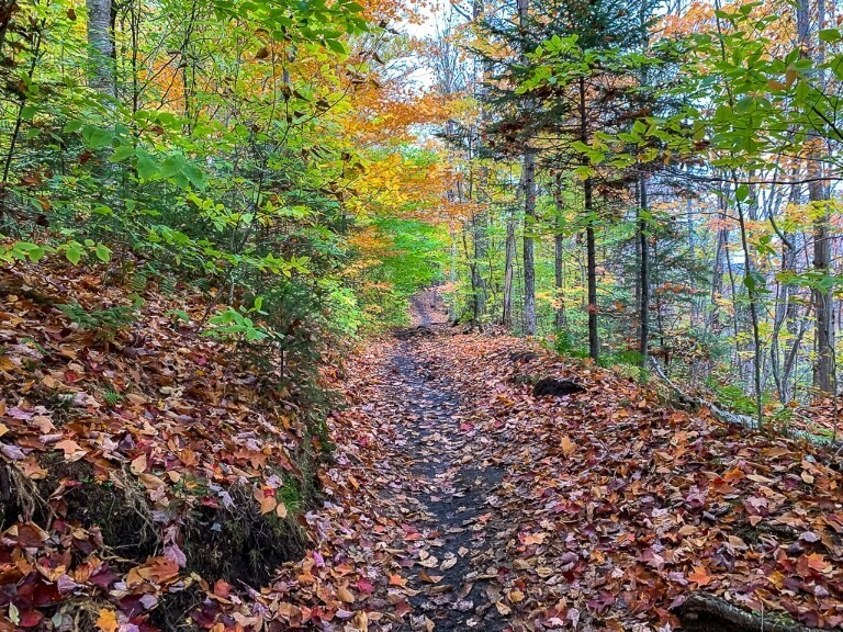 Fall foliage colors on the ground trail mount marcy hike in lake placid ny
