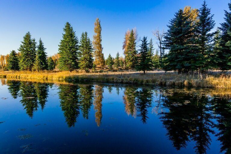 green and yellow trees with golden grass meadows reflecting on perfectly still dark blue river