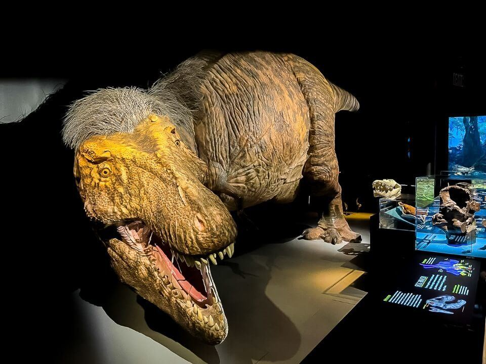 Dinosaur T Rex at the Museum of Natural History NYC