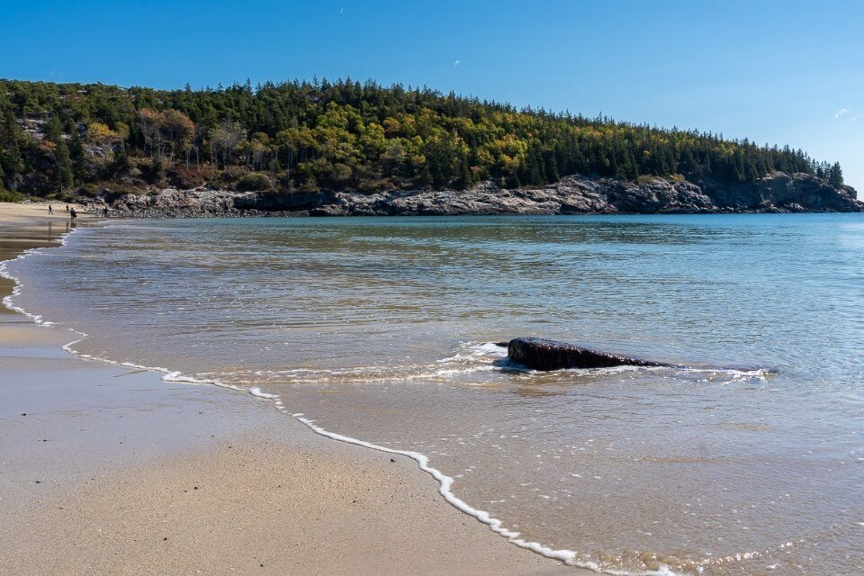 Sand Beach gulf of maine and trees on a headland